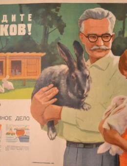 «Разводите кроликов!» художник С.Моверман 60х90 трж.75 000 Главкоопторгреклама 1966г