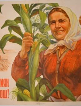 «От сортовых семян и урожай хороший!» художник М.Соловьев 57х87 трж. 200 000 ИЗОГИЗ 1955г