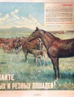 «Выращивайте выносливых и резвых лошадей ! » Художник А. Пржецлавский 43х62 «Искусство» 1947г.