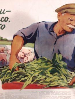 «Корма — это мясо, молоко» Художник О.Долотин 60х80 Киев 1958г.