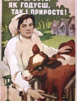 Дiло просте, як годуеш, так i приросте ! Художник М.Баландюк 88х57 Киев 1957г