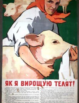 Как я выращиваю телят ! Художник Т.Лящук 100х58 Киев 1959г